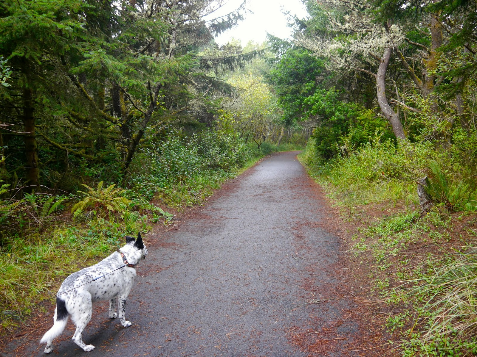 Cooper On The First Part Of Path From South Beach State Park Campground To Ocean
