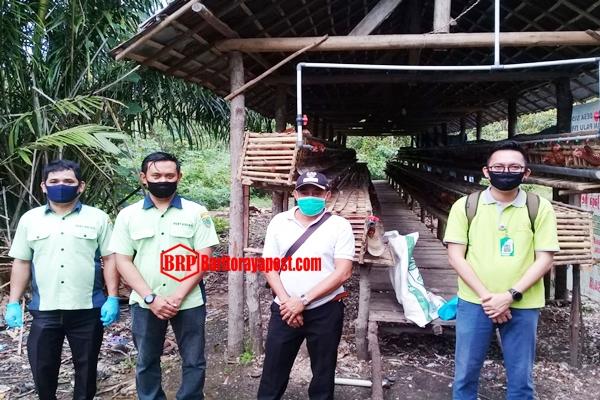 Selaras Dengan Program Pemerintah Guna Tingkatkan Ekonomi, Desa Siong Budidayakan Ayam Petelur