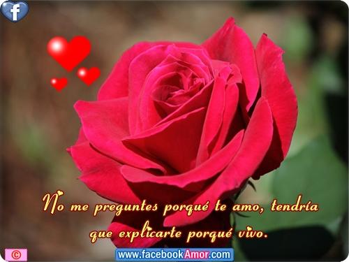 Rosas Rojas Con Frases De Amor: Imágenes Bonitas Para Facebook Amor Y Amistad