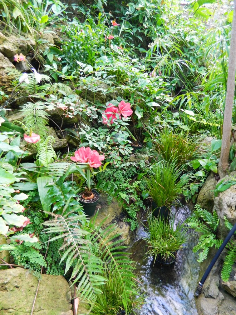 Centennial Park Conservatory tropical house waterfall by garden muses-not another Toronto gardening blog