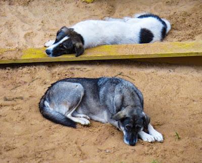 Cães abandonados podem ser uma epidemia. Como salvar a vida destes pets