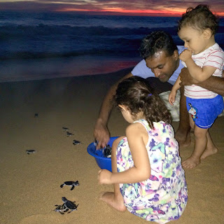 Father and two children releasing baby turtles into sea