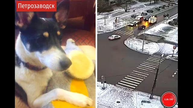 В Петрозаводске водитель выбросил собаку на дорогу из машины! Животное долго бежало за машиной!