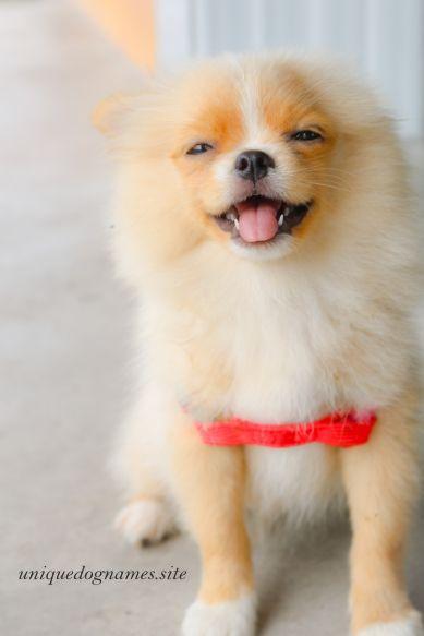 cute female dog names,cute female dog names unique
