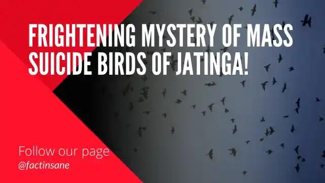 Mystery Of Mass Sucinding birds of jatinga, Jatinga