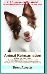 Reincarnation- pet reincarnation