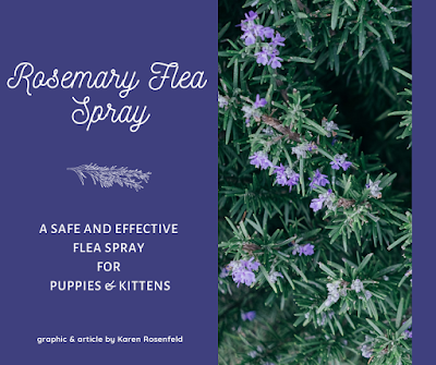 Rosemary flea spray, dip for puppies and kittens