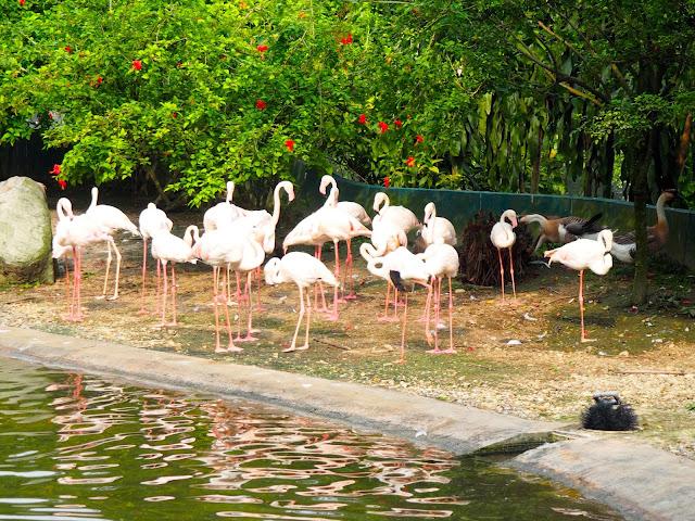 Flamingos at the Bird Park, Kuala Lumpur, Malaysia