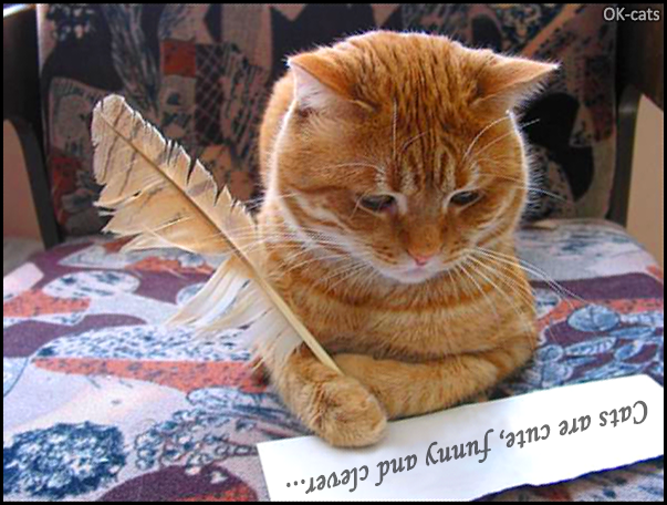 """Photoshopped Cat picture • """"Excuse me Mr Cat, you're so clever but what did you write"""""""