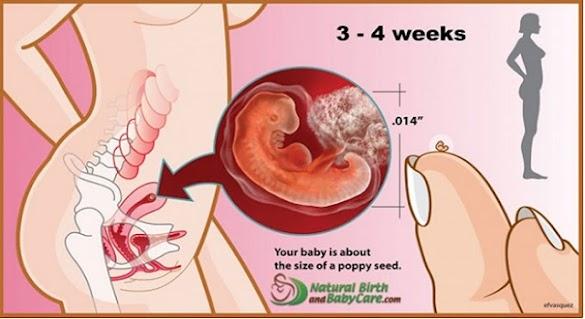 Nikah Baru 2 minggu, Tapi Usia Kehamilan Udah 1 Bulan. Kok Bisa? Jangan Suudzon Dulu, Karena Itu Normal. Begini Penjelasannya