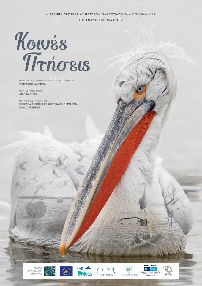 Εταιρία Προστασίας Πρεσπών : Διαδικτυακή πρεμιέρα για το ντοκιμαντέρ «Κοινές Πτήσεις»