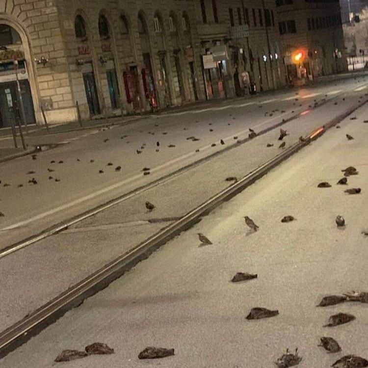 Mass death of birds in Rome