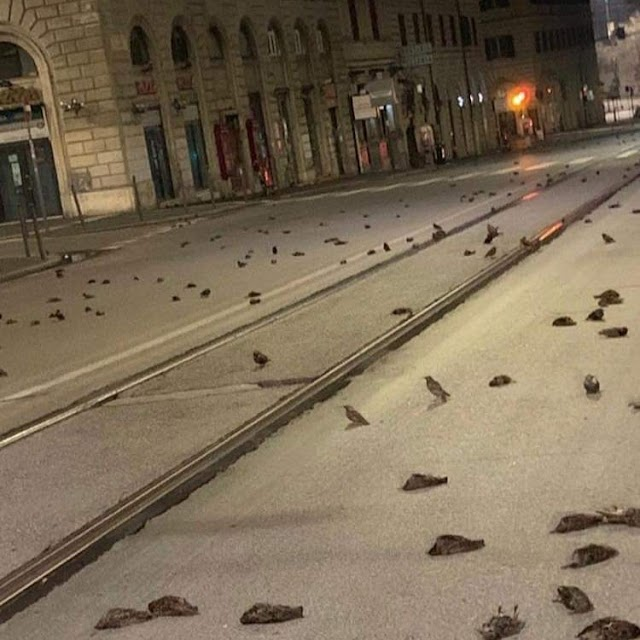 New Year's Eve ends with the massacre of Hundreds of birds