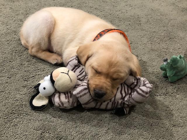 chase is sleeping