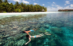 maldives Take a Swim among the Reefs