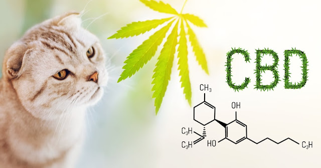 Is CBD Oil Good for Cats?