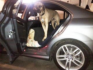 transporte cães pesados