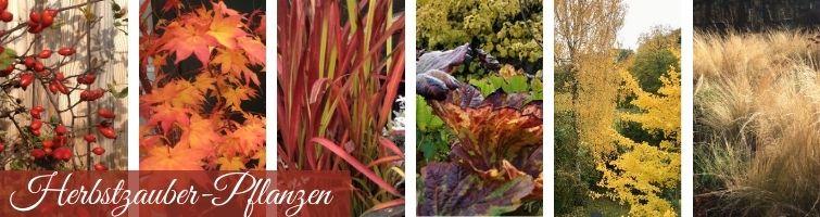 Herbstzauber Pflanzen Ideen-Sammlung