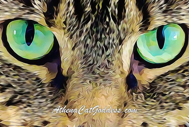 Close up cat green eyes