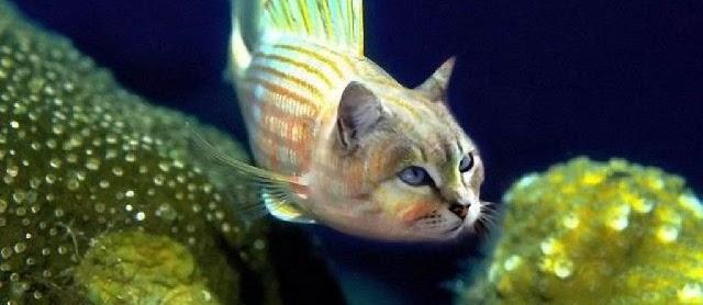 Gambar Ikan Lucu Kartun dan Asli Bikin Ngakak