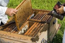Εξισορρόπηση της δυναμικότητας των μελισσιών