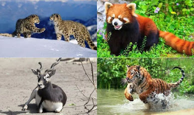 Endangered animals soon to be extinct...