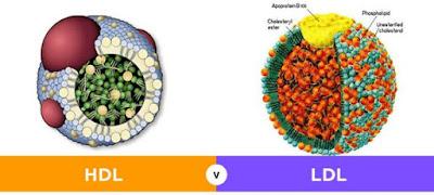 benarkah daun pandan bisa menurunkan kolesterol, efek samping daun pandan, khasiat daun pandan untuk asam urat, khasiat daun pandan untuk hipertensi, khasiat minum air rebusan daun pandan, khasiat daun pandan untuk kesehatan, khasiat daun pandan untuk kulit