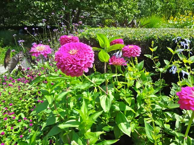 Flores nos parques internacionais - Central Park - NY