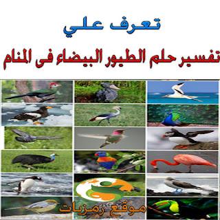 حلم رؤية الطيورالبيضاء والبومه والببغاء والنعامه والعصفوره واليمامه والبط