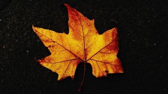 Осеннее равноденствие 22 сентября 2020 года: как подготовиться по Знаку Зодиака