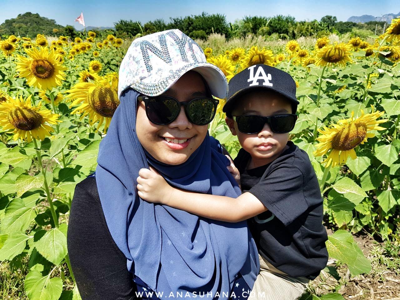 Sunflower Field Lopburi