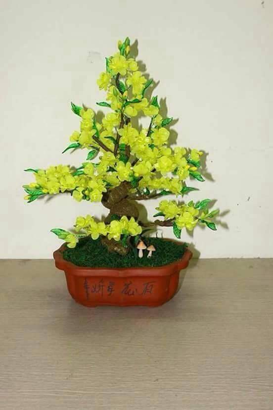 Goc bonsai mai dao cay hoa mai o Hong Mai