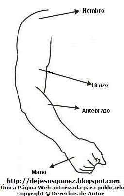 Dibujo de la extremidad superior del Cuerpo Humano indicando sus partes para colorear pintar e imprimir. Dibujo de la extremidad de Jesus Gomez