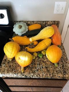 an assortment of a dozen squash on a countertop