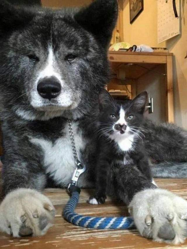 Funny animals of the week - 13 July 2018, cute animal picture, best funny animals
