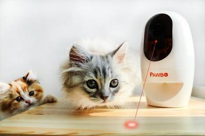 Pawbo Wi-Fi Camera