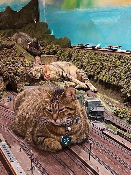 Cats sleeping on a toy train set