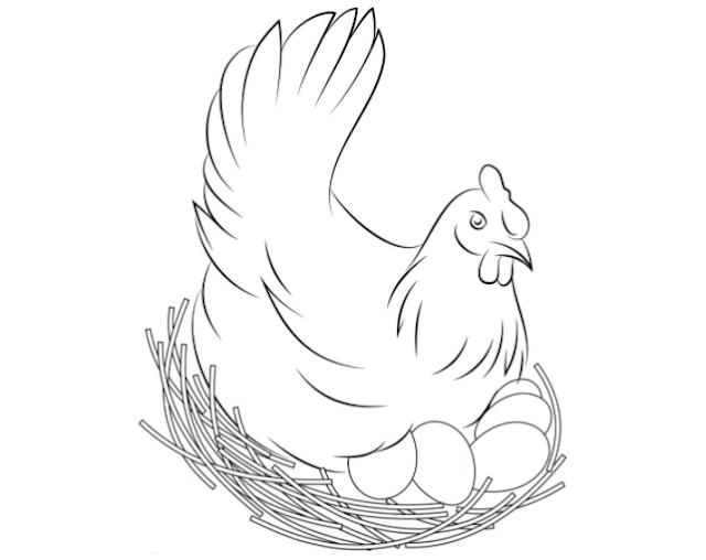 Gambar ayam kartun hitam putih