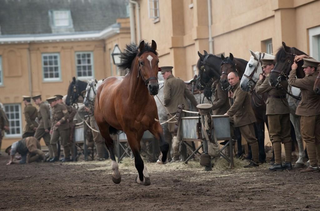 Camisas e Manias: Cavalo de Guerra