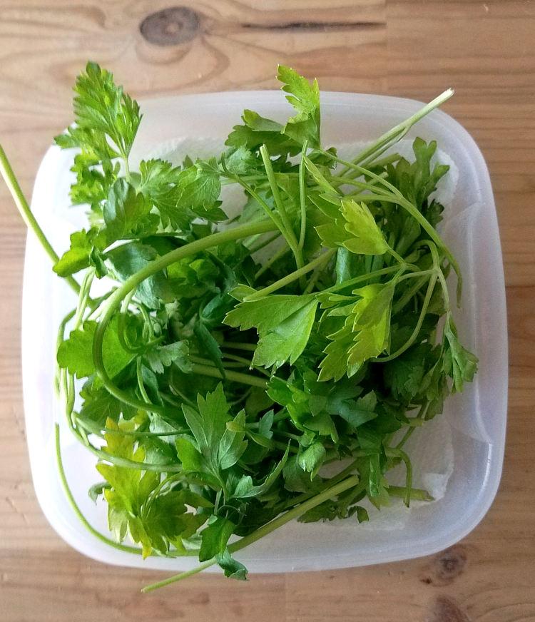 Perejil o cilantro recuperado listo para usar en la cocina