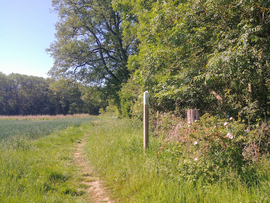 Footpath in north Hertfordshire. Image by Hertfordshire Walker released under Creative Commons