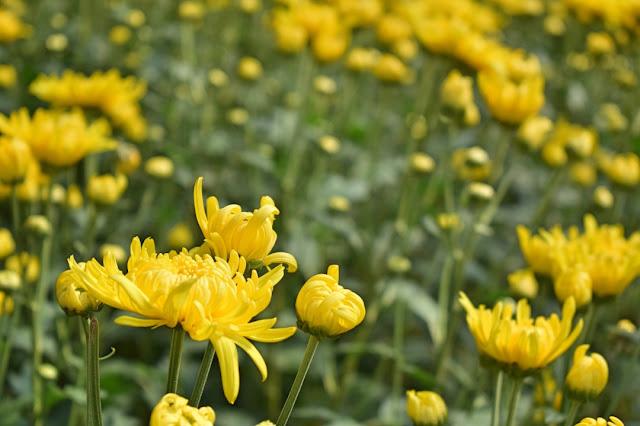 Blog Apaixonados por Viagens - Holambra - Capital das Flores