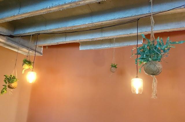 Planten voor event kokedama's en hangplanten in hangpotten huren of kopen