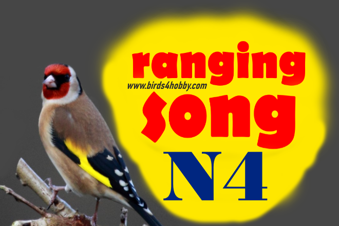 the ranging songs of goldfinch Before Mating number 04