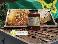 miel sin glifosato ecoapi ecoapicultores