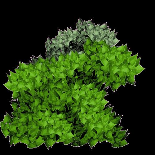 Zoom dise o y fotografia arbustos follaje y plantas verdes for Arbustos con flores