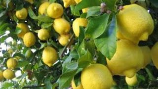 """عزمي مجاهد: الاخوان وراء ازمة الليمون اصدرو أوامر لعناصرهم بسحب """"الليمون"""" من الأسواق """"اضغط للتفاصيل"""""""