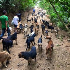 Largest Sanctuary Dog 900 Stray Dogs