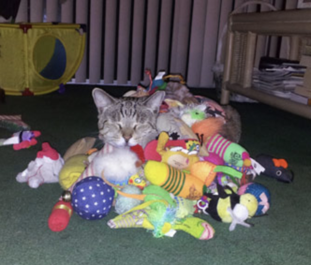 "7. This cat, who says there is no such thing as ""too many toys."""