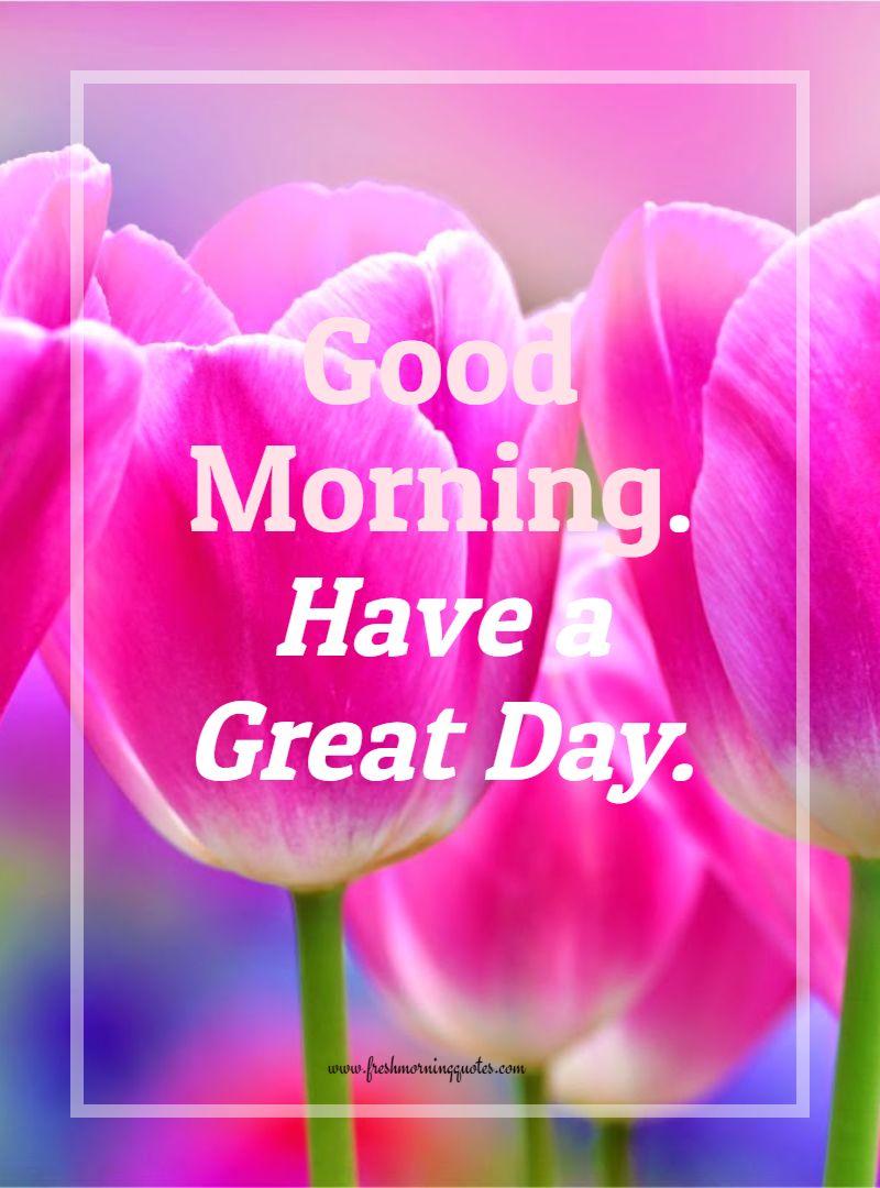 Good morning tulip flower
